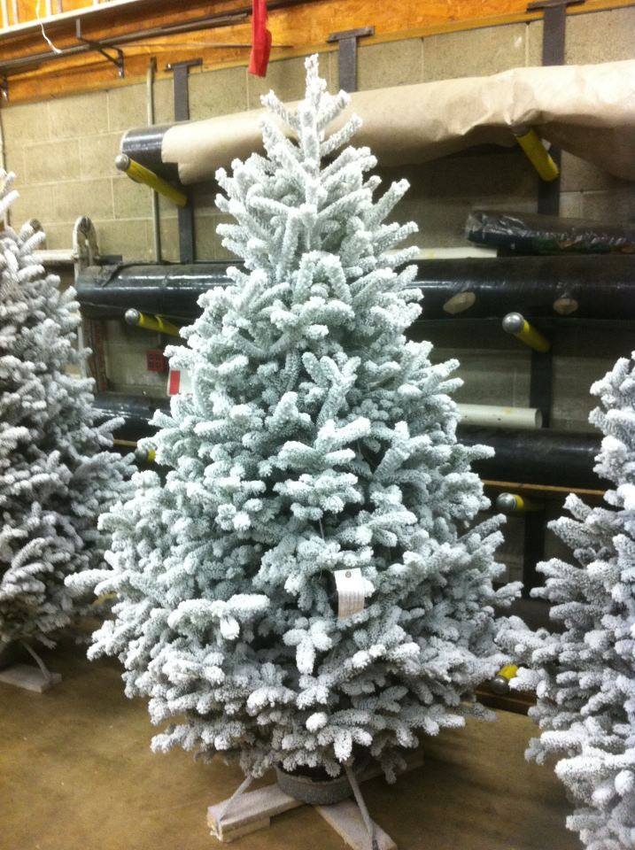 Flocked Christmas Trees | Joseph's Nursery | Monessen PA